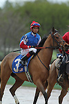 HOT SPRINGS, AR - MARCH 12: Jockey Ramon Vazquez aboard She's A Bootsy Too (3) during post parade of the Honeybee Stakes at Oaklawn Park on March 12, 2016 in Hot Springs, Arkansas. (Photo by Justin Manning)