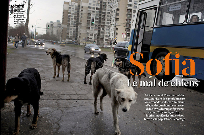 French Weekly magazine L'EXPRESS on the street dogs in Sofia, Bulgaria, 04.2012...Photos: Pierre Marsaut