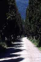 Tree lined road in Tuscany<br />