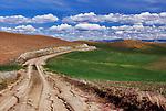 Old road in wheat fields in the Palouse Hills, WA