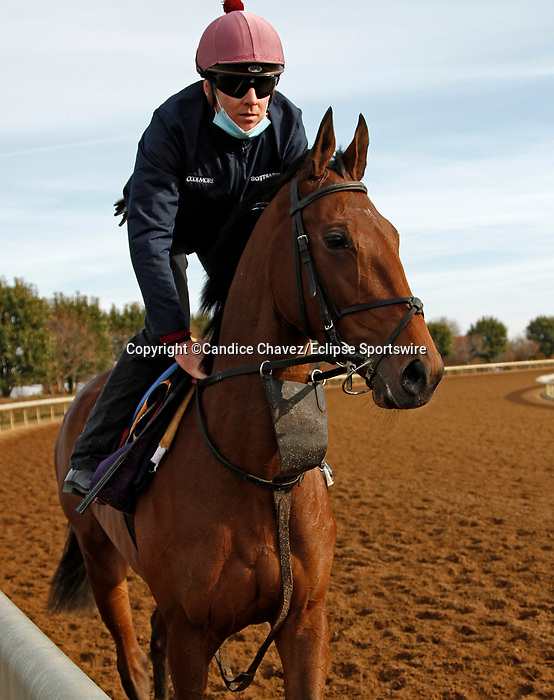 Snowfall, trained by trainer Aidan P. O'Brien, exercises in preparation for the Breeders' Cup Juvenile Fillies Turf at Keeneland Racetrack in Lexington, Kentucky on November 5, 2020.