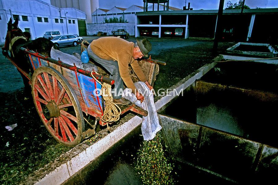 Cooperativa produtora de azeite de oliva no Alentejo, Portugal. 1999. Foto de Juca Martins.