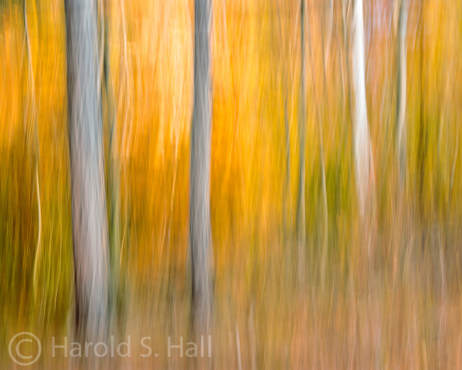 Autumn trees are blurred by moving the camera as the photo is captured.