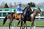 27 March 2010: Orchestrator and Alex Solis in the post parade before the G3 Bourbonette Oaks at Turfway Park in Florence, Kentucky.