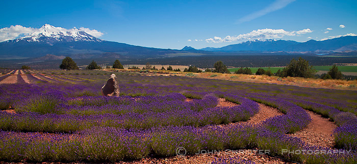 Lavender field labyrinth near Mt. Shasta, Northern California