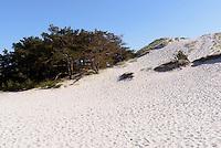 Dünen von Dueodde auf der Insel Bornholm, Dänemark, Europa<br /> dunes of Dueodde, Isle of Bornholm Denmark