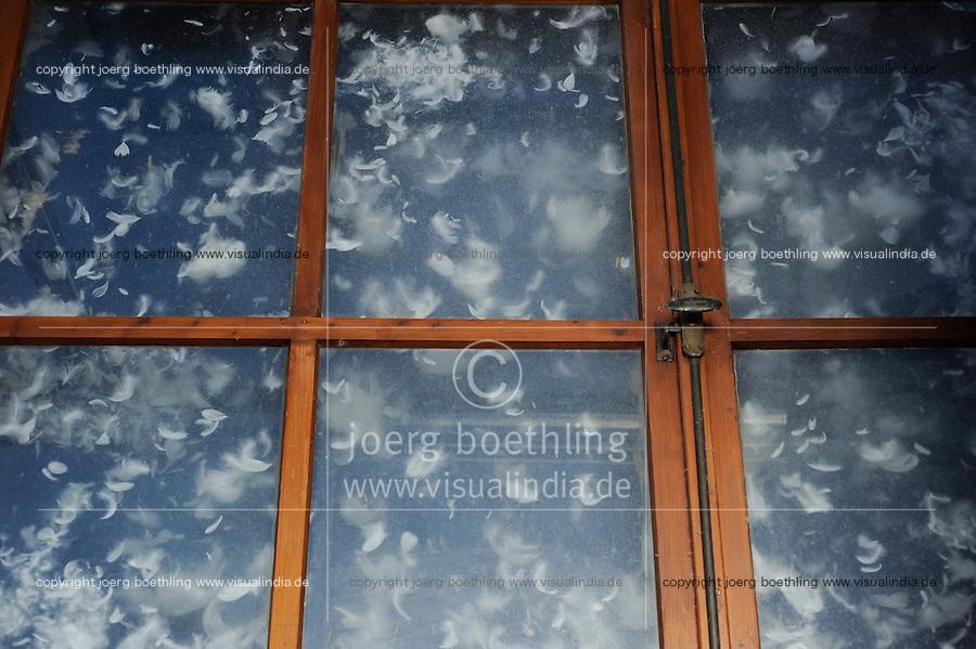 GERMANY, Wermsdorf, company Eskildsen, machine for goose down processing from geese feather / DEUTSCHLAND Gaensezucht Eskildsen in Wermsdorf suedlich von Leipzig, Maschine fuer Daunenherstellung
