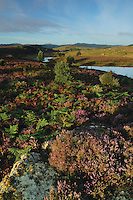 Loch nam Faoileag near Drumnadrochit, Inverness-shire<br /> <br /> Copyright www.scottishhorizons.co.uk/Keith Fergus 2011 All Rights Reserved
