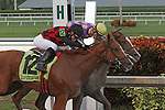 October 04, 2014: #7 Sing Praises with jockey  Ramsey Zimmerman on board hangs on to win the Florida Sire Stakes In Reality Division over #12 Royal Squeeze (FL) with jockey Jose Valdivia Jr on board at Gulfstream Park, in Hallandale Beach, Florida..  Liz Lamont/ESW/CSM