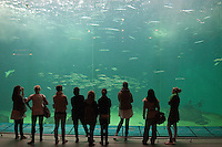 Besucher in Meeresaquarium, marines Aquarium mit Meeresfischen, Besucher blicken in riesiges Becken mit großen Fischen, Schauaquarium