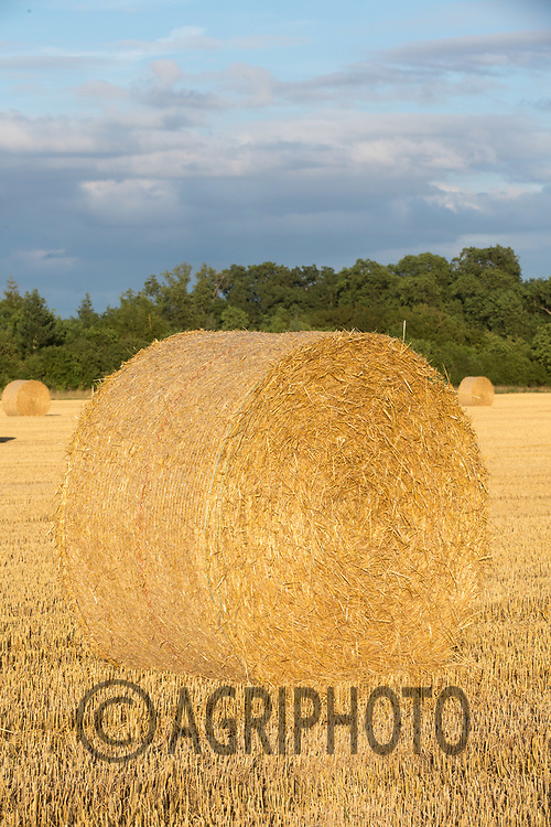 Round bales of Barley straw in the late evening sunshine<br /> Picture Tim Scrivener 07850 303986<br /> ….covering agriculture in the UK….