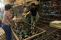 "A wild duck stall at Lo Chun Wai (wild Animal Food) Market on the outskirts of Guangzhou, Guangdong Province, South China in this file photo. China's wild animal markets, where live wild animals and reared animals are sold are the source of many viruses that mutate as they ""jump"" from animals to humans. The coronavirus COVID-19 is thought to have originated in an animal market in China. <br /> By Sinopix Photo Agency"
