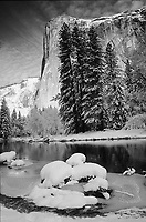 A black-and-white version of a fine art winter nature scene of El Capitan in Yosemite Valley National Park, California, U.S.A., looking across the Merced River as morning sun falls upon El Capitan with a sky streaked with white clouds background, just after a fresh overnight snowfall adorning the pines and grass mounds in the Merced River.  After a fresh snowfall, the snow has often melted from boughs of pine trees by midday, making this a rare shot.