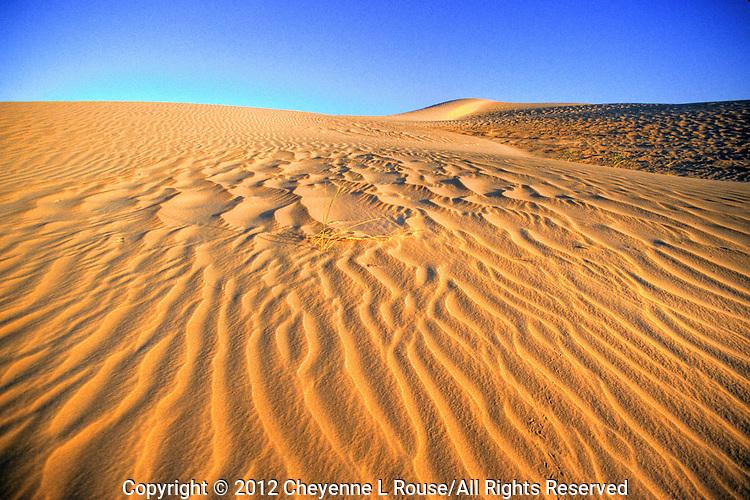 Sand Dune Texture - California - Imperial Sand Dunes (color)