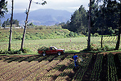 Costa Rica. Workers on a mixed farm growing vegetables; irrigation hoses.