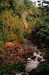 Hot water springs<br /> <br /> Sources d eau chaude Ile de la Dominique.