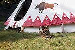 Native American Indian dog with beaded collar pet animal tipi