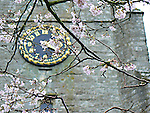 Spring blossoms against the clock tower of St Peter and St Paul church, Charing, Kent, UK.