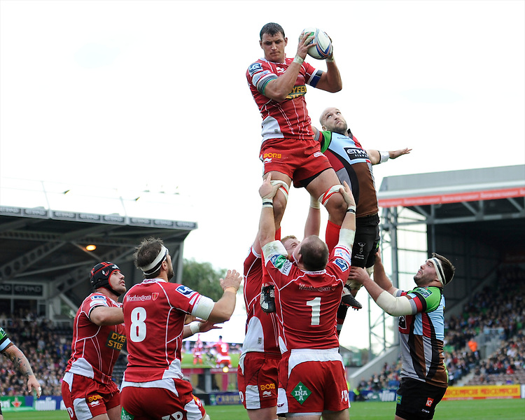 Aaron Shingler of Scarlets wins the lineout during the Heineken Cup Round 1 match between Harlequins and Scarlets at the Twickenham Stoop on Saturday 12th October 2013 (Photo by Rob Munro)