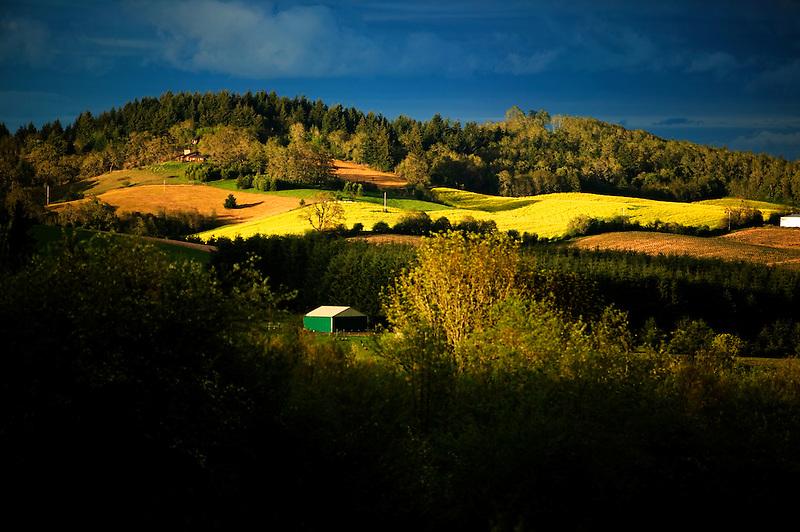 Barn and mustard field. Near Alpine, Oregon