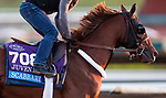 October 28, 2019 : Breeders' Cup Juvenile  entrant Scabbard, trained by Eddie Kenneally, exercises in preparation for the Breeders' Cup World Championships at Santa Anita Park in Arcadia, California on October 28, 2019. Carolyn Simancik/Eclipse Sportswire/Breeders' Cup/CSM