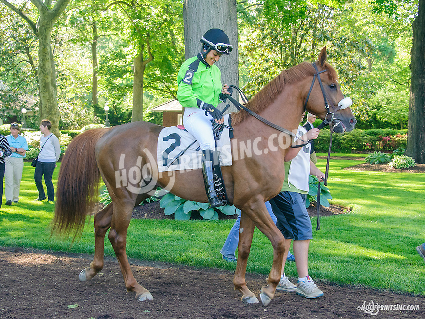 Quick and Rich in the paddock at Delaware Park before the 1st arabian race of 2015 on 5/23/15