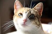 BOGOTA-COLOMBIA-ENERO 28. Gato doméstico, (Foto/VizzorImage / Felipe Caicedo / Staff).BOGOTA-COLOMBIA-JANUARY 28. Domestic Cat , (Photo / VizzorImage / Felipe Caicedo / Staff