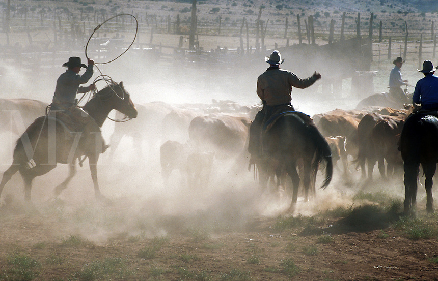 Cowboys on horseback during the Spring cattle roundup.