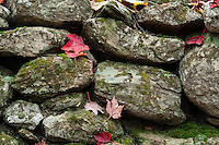 Stone fence and autumn leaves, Vermont, USA
