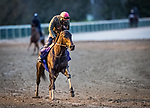 Ollie's Candy, trained by John W. Sadler, exercises in preparation for the Breeders' Cup Distaff at Keeneland 10.30.20