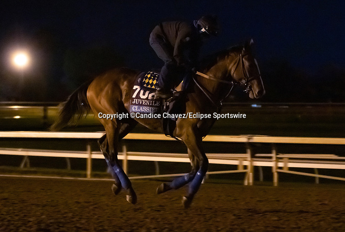Classier, trained by trainer Bob Baffert, exercises in preparation for the Breeders' Cup Juvenile at Keeneland Racetrack in Lexington, Kentucky on November 4, 2020.