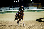 October 31, 2018 : Giant Expectations, trained by Peter A. Eurton, exercises in preparation for the Breeders' Cup Dirt Mile at Churchill Downs on October 31, 2018 in Louisville, Kentucky. Evers/ESW/Breeders Cup