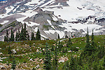 Day hikers in the Paradise area of Mount Rainier National Park pause along the Skyline Trail.  Mount Rainier's flanks loom in the background.