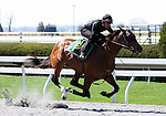 01 April 2010.  Hip #134 Distorted Humor - Whichwaydidshego colt.