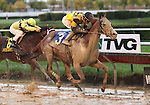 3 October 2009: AWESOME GEM with jockey David Flores winning the 73rd running of the G2 Hawthorne Gold Cup at Hawthorne Race Course in Cicero/Stickney, Illinois.