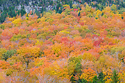 Bald Mountain in Franconia Notch State Park of New Hampshire during the autumn months.