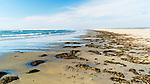 Kelp washes ashore along Grayland Beach, Washington.  Grayland Beach Stae Park.