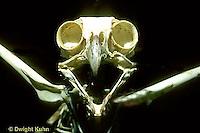OW14-004b  Great Horned Owl - skeleton showing head - Bubo virginianus