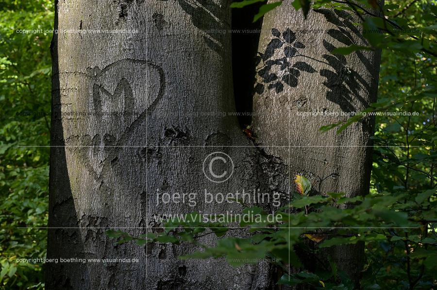 GERMANY, Hamburg, forest / Deutschland, Hamburg, Wald im Jenisch Park, Buche mit Rindenbeschädigung