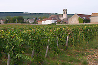 Vineyard. P village and church. Pommard, Cote de Beaune, d'Or, Burgundy, France