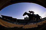 Mamma Kimbo with jockey Martin Garcia up breaks her maiden at Santa Anita Park on February 18, 2012.