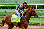 April 28, 2021: Like The King exercises in preparation for the Kentucky Derby at Churchill Downs at Churchill Downs at Churchill Downs on April 29, 2021 in Louisville, Kentucky. John Voorhees/Eclipse Sportswire/CSM