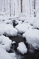 Heavy snow on Tom's Branch