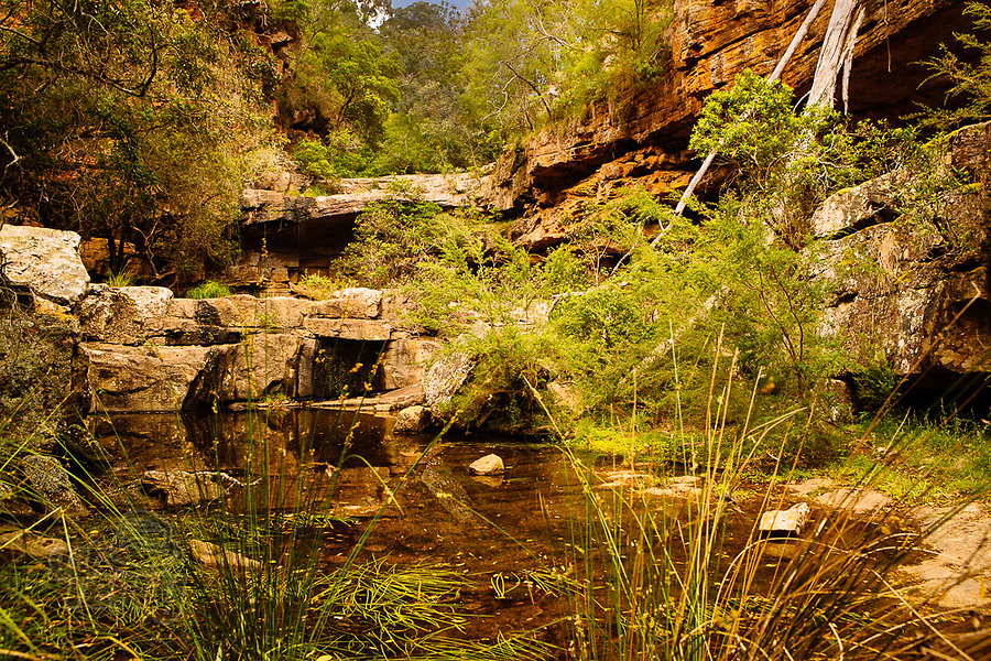 Image Ref: CA1222<br /> Location: Mitchell River National Park, Victoria<br /> Date of Shot: 05.12.20