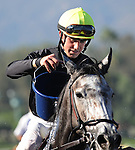 October 17, 2009.Joseph Talamo pours water over Rose Diamond to cool her down after wining the 6th at Oak Tree, Santa Anita Park,  Arcadia, CA