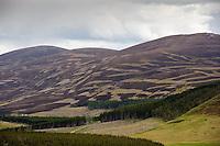 Patterns in heather due to heather burning, Corgarff, Aberdeenshire.