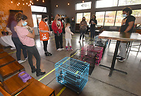 GOOD HOMES FOR KITTENS<br />People check out the selection of kittens on Satuday Nov. 14 2020 during a kitten adoption event at New Province Brewing in Rogers. Best Friends Animal Society and the brewery hosted the event to find good homes for kittens, said Lauren Clingenpeel with Best Friends Animal Society. Kittens, all spayed or neutered, were from Wilson Zoo, an animal refuge in Benton County, she said. People adopting kittens paid an adoption fee at the event. Go to nwaonline.com/201115Daily/ to see more photos.<br />(NWA Democrat-Gazette/Flip Putthoff)