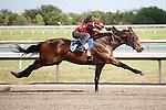 #56.Fasig-Tipton Florida Sale,Under Tack Show. Palm Meadows Florida 03-23-2012