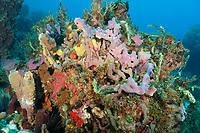 Lumpy overgrowing spongen, Holopsamma helwigi, azure vase sponge, Callyspongia plicifera, Martinique, French Island, Caribbean Sea, Atlantic