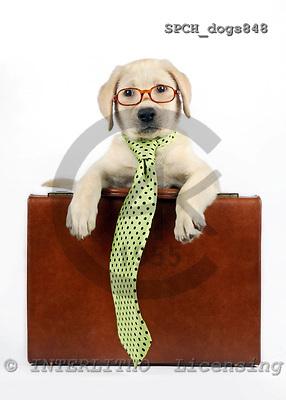 Xavier, ANIMALS, dogs, photos, SPCHDOGS848,#a# Hunde, perros